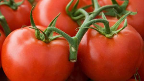 Warzywna gwiazda – pomidor!