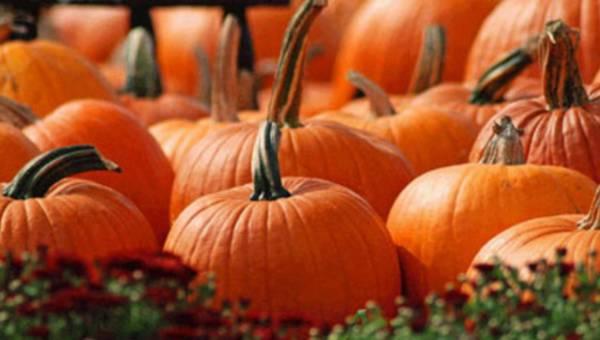 Jesień w kolorze dyni – potrawach z dyni opowiada szef kuchni Knorr