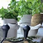Kuchnia z ziolami