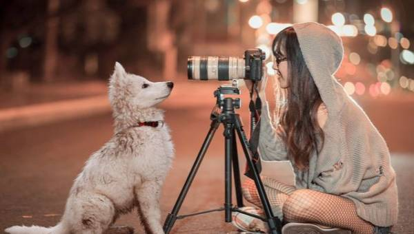 Zwierzaki gwiazd na Instagramie