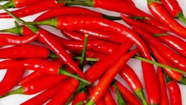 Papryka Cayenne – dla zdrowia i urody
