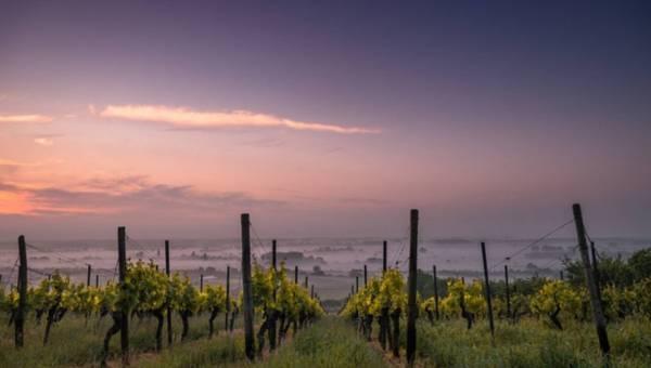 Nietypowe wakacje: zwiedzamy winnice Europy