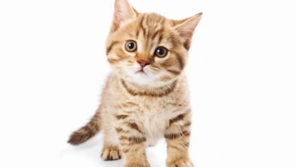 Jak chować kota w domu ?