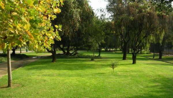 Modny ogród