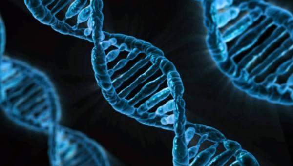 Wpływ wolnych rodników na organizm