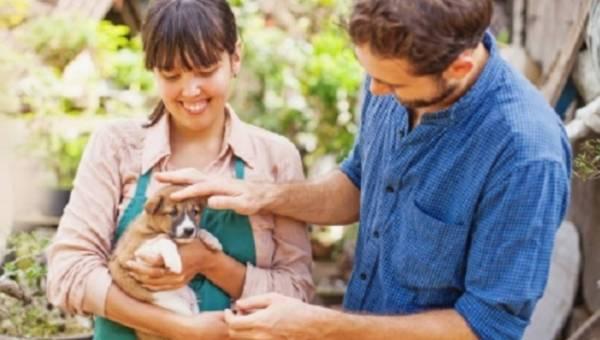Jak zapobiegać zagubieniu się psa lub kota?