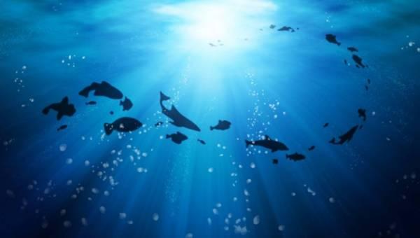 """Rozmowa z Dr Sylvią Earle: """"Nie ma opcji, żeby nie interesować się oceanem"""""""