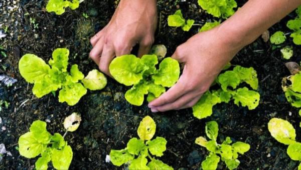 Co to znaczy żywność ekologiczna?