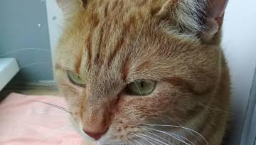 20 rzeczy o których nie wiedzieliście, zanim nie kupiliście kota