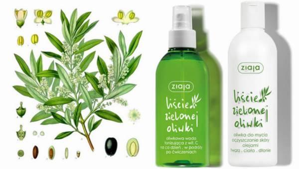 Nowa seria kosmetyków Ziaja – Liście Zielonej Oliwki