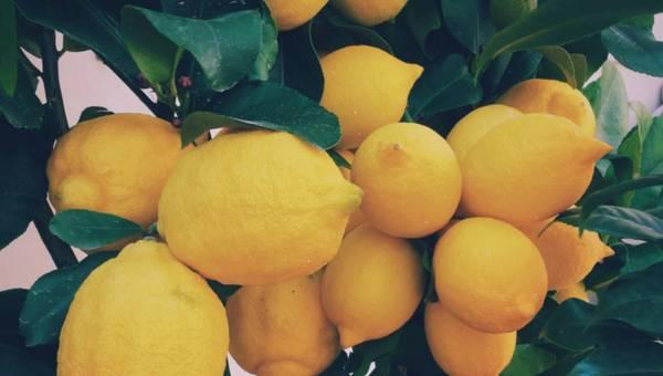 Dlaczego potrzebujemy witaminy C w naszej diecie?
