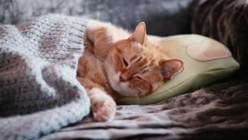 Czy spanie ze zwierzętami jest zdrowe?