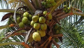 Olej kokosowy zastosowanie – dlaczego jest cenny dla zdrowia i urody