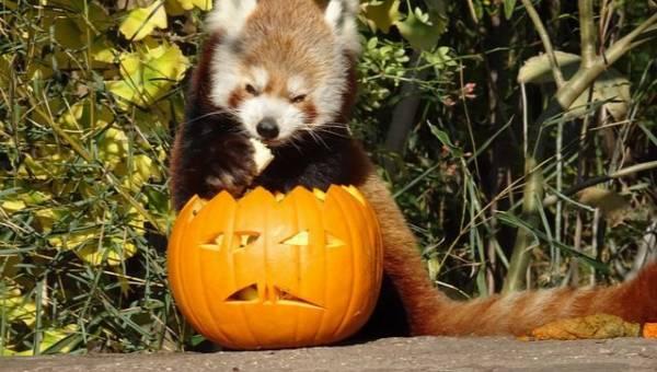 Te zwierzaki są gotowe na Halloween!