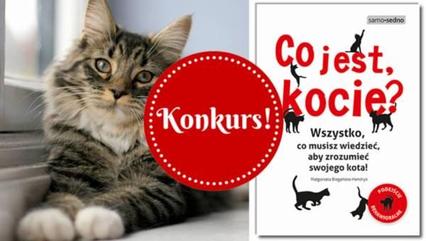 Wyniki konkursu: Co jest kocie? Poznaj kocią naturę i wygraj poradnik!
