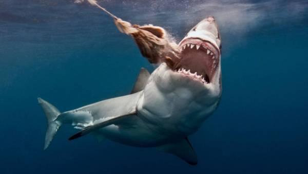 Niebezpieczne zwierzęta, które spotkasz w morzu