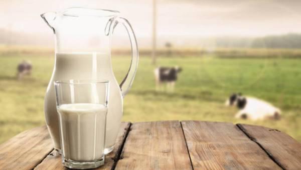 Dlaczego warto pić mleko niepasteryzowane?