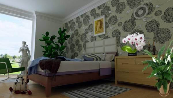 Prawdziwe tlenowe bomby do Twojej sypialni – rośliny które produkują tlen w nocy