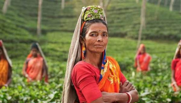 Podróże śladami herbaty