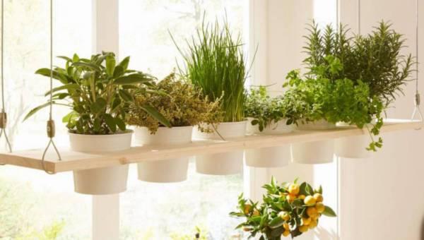 DIY: Zatrzymaj lato i stwórz domowy zielnik własnej roboty!