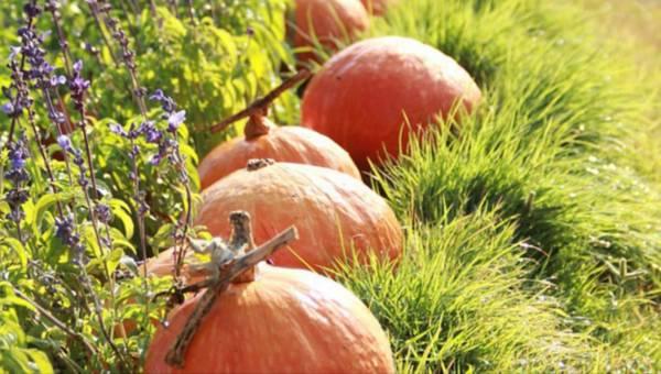 Co dodać do kąpieli jesienią: dynię, olejek migdałowy, a może liście jeżyn?