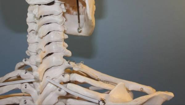 Cicha złodziejka kości – czy osteoporoza to problem, który mnie dotyczy?