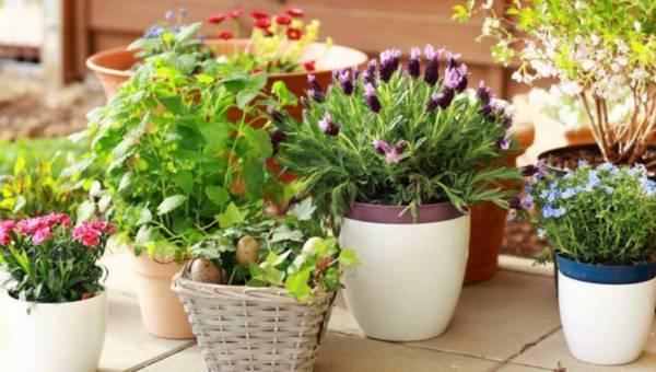 Pielęgnacja roślin doniczkowych. O czym należy pamiętać?