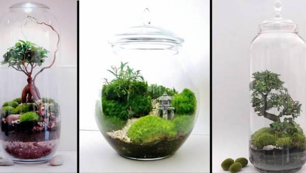 Drzewo w szkle zaklęte – stwórz własny las w słoju lub butelce!