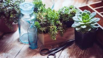 Kwiaty doniczkowe dla początkujących, czyli rośliny łatwe w uprawie