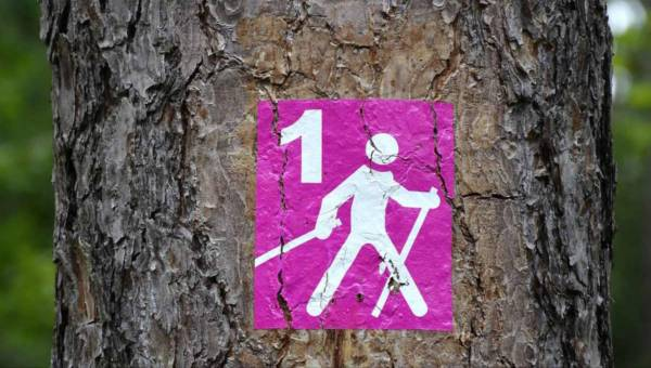 Jak schudnąć z nordic walking? Plan działania wraz z dietą