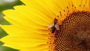 Domowe sposoby na odstraszenie owadów i innych żyjątek
