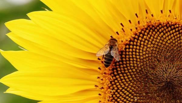 Jak odstraszyć owady – domowe sposoby na komary, pszczoły i inne żyjątka