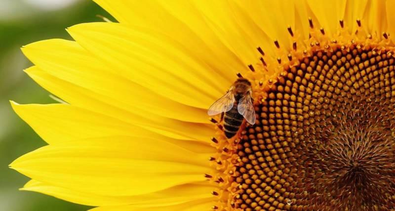 domowe sposoby na odstraszenie owadów