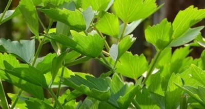 Jakie zioła i przyprawy to afrodyzjaki