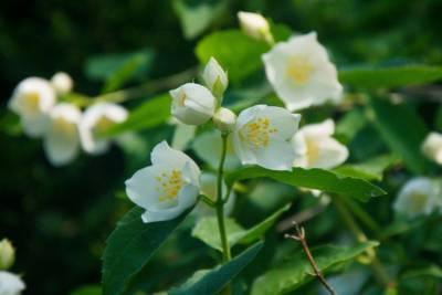 olejki z kwiatów