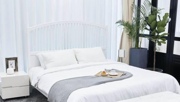 Najzdrowsze rośliny do sypialni
