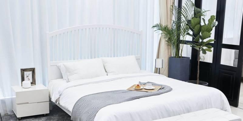 Najzdrowsze Rośliny Do Sypialni Oczyszczające Powietrze