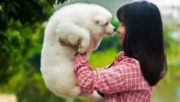 Zwierzęta dla samotnych, czyli najlepsi przyjaciele singli