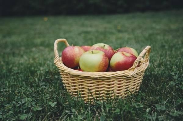 jabłka w koszyku