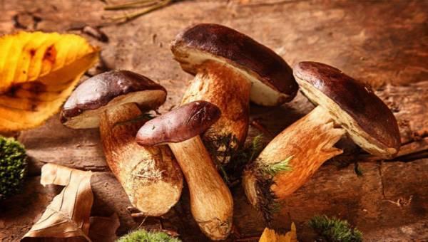 Sezon na grzyby – 6 powodów, dla których warto je jeść