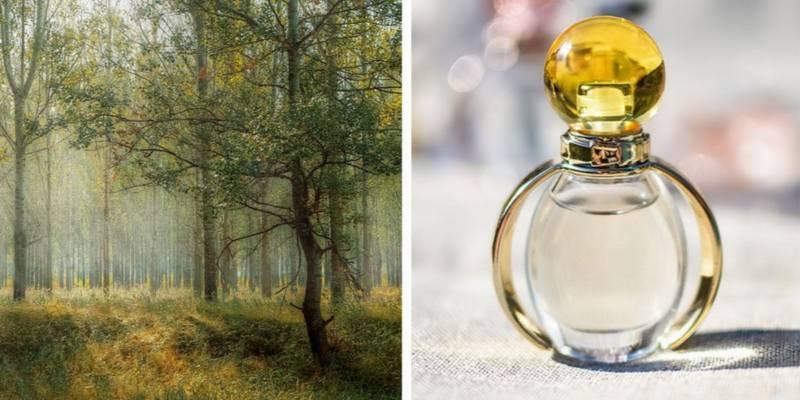 zapachy drzewne - perfumy o leśnym zapachu