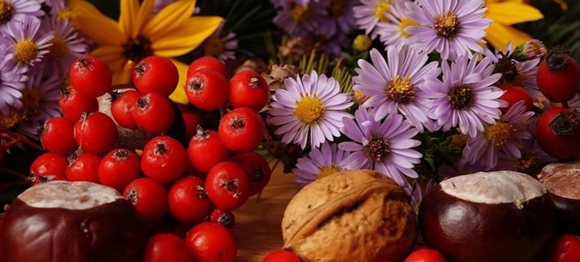 Jarzębina – właściwości dla zdrowia, smaku i urody. PRZEPISY na przetwory z jarzębiny