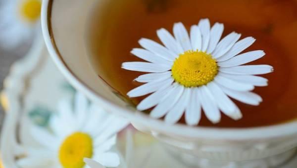 Zioła oczyszczające organizm z toksyn. 4 najskuteczniejsze rośliny i oczyszczające herbatki