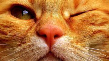 Imiona dla kota – sprawdź, jak oryginalnie nazwać swojego pupila!