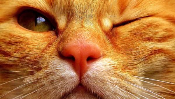Imię dla kota – sprawdź, jak oryginalnie nazwać swojego pupila!