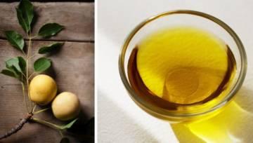 Olej marula – skarb afrykańskich drzew
