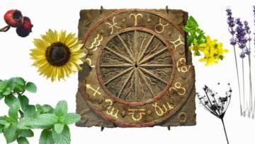 Ziołowy horoskop dla każdego znaku zodiaku – znajdź swoje ochronne ziele!