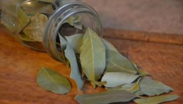 Nalewka laurowa i inne specyfiki na bazie liścia laurowego: przepisy