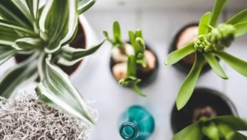 Rośliny oczyszczające powietrze ze smogu – TOP 10
