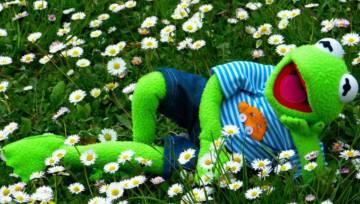 Znana żaba przedstawia trend z wybiegów na wiosnę 2018 – kermit green!